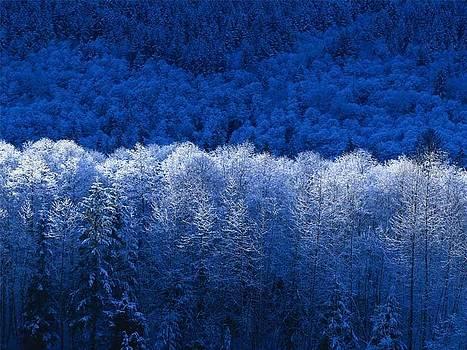 Winter by Jack Gledhill