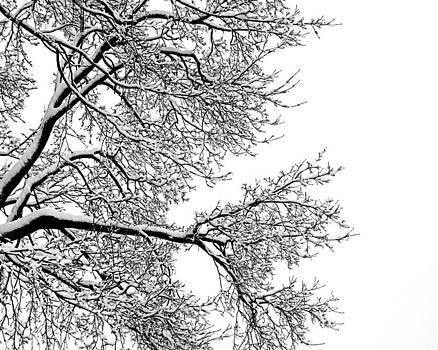 Winter by Jeannette Sheehy