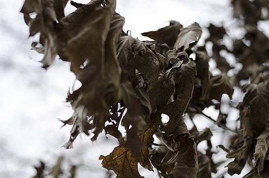 Winter leaves  by Marcel Krasner