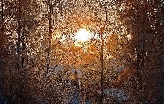 Winter Light by Nikolay Krusser