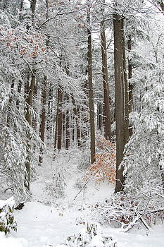 Winter by Lisa Lamir