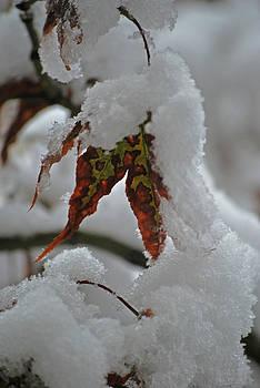 Michelle Cruz - Winter Meets Fall