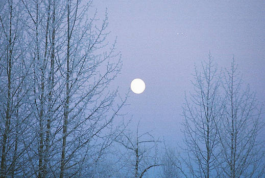 Winter Moon by Frank  Trainer