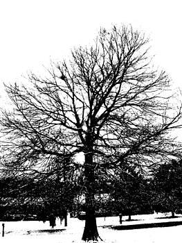 Winter Oak by David Campbell