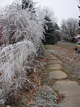 Windy Mountain - Winter Overgrown Sidewalk