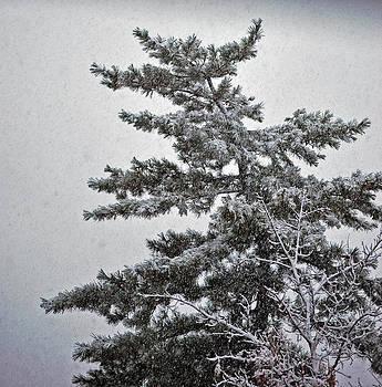 Michelle Cruz - Winter Pine