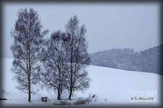 Winter Scene by Tom Andrews