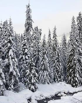 Winter Snow Scene by Sylvia Hart