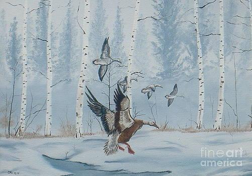 Winter Stopover by Michael Allen