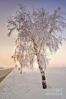 Winter sunset by Evmeniya Stankova