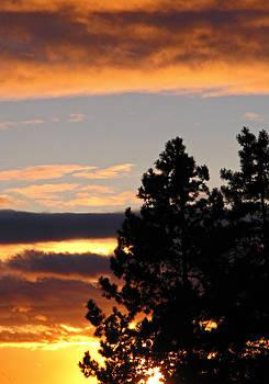 Winter Sunset by Sandra Longstreet