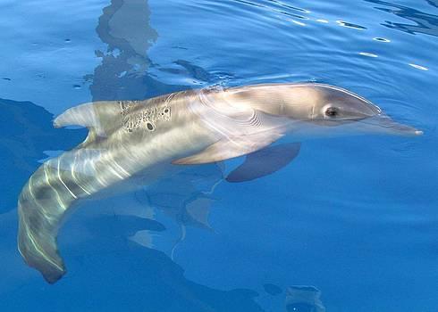 Winter the Dolphin by Andrea Linquanti