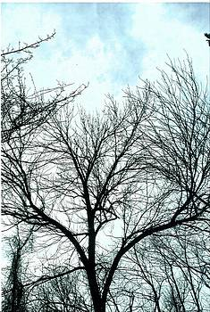 Winter Tree 1 by Suzanne Fenster