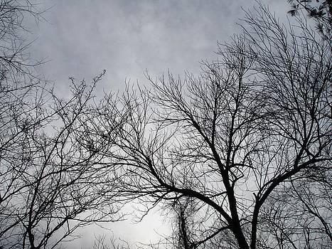 Winter Tree II by Suzanne Fenster