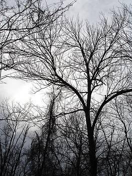 Winter Tree III by Suzanne Fenster