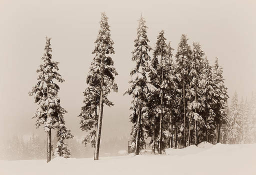 Marilyn Wilson - Winter Trees - sepia
