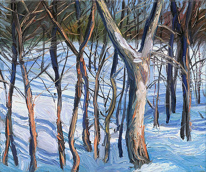 Winter woods by Jack Tzekov