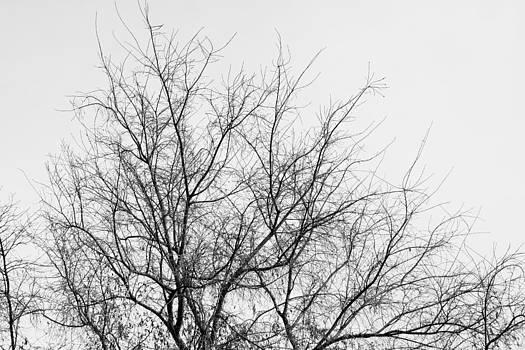 Winter by Zsuzsanna Szugyi