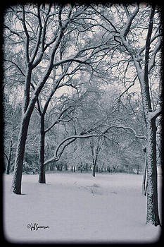 Winter's Beauty by Jeff Swanson