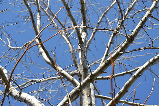 Winter's Branches by Naomi Berhane