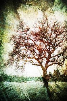 Winter's Chill by Stuart Deacon