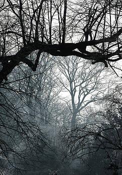 Wintertree by Erik Tanghe