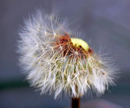 Linda Sannuti - Wishing