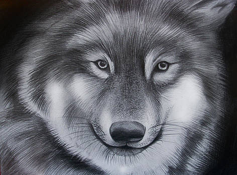 Wolf by Hayley Knowles
