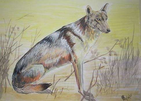 Wolf by Jitendra Gavali