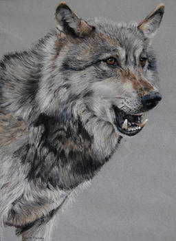 Wolf by Tanya Patey