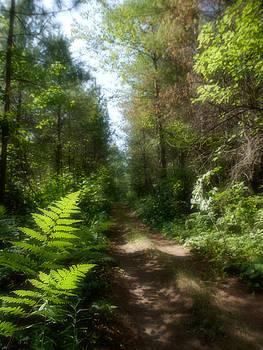 Wondrous Path by Yves Pelletier