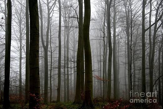 Wood by Anne Seltmann