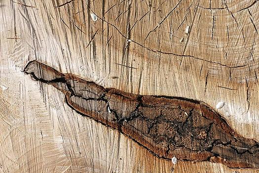 Wood design by Erik Tanghe
