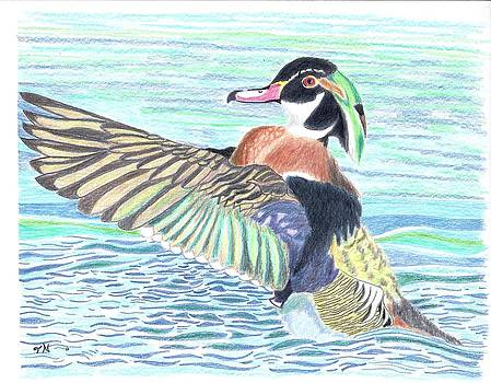 Wood Duck Drake by Tony  Nelson