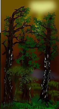 Wood Mist by Gary Kennedy