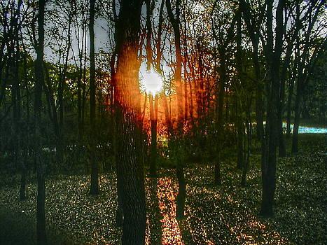 Frank SantAgata - Woodland Awakening