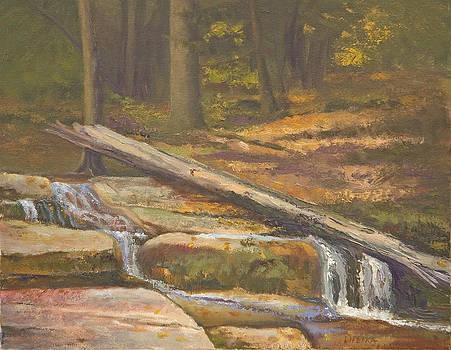 Woodland Falls by Karen Lipeika