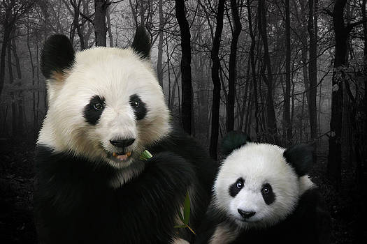 Julie L Hoddinott - Woodland Giant Pandas
