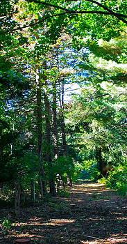 Woodland Path by Susan Elise Shiebler