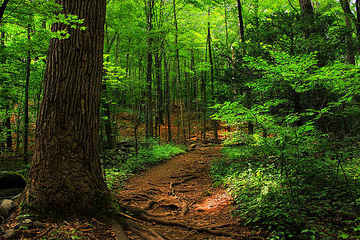 Woodland Pathway by Cathy Leite Photography