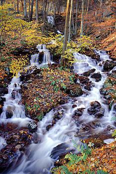 Woodland Stream - Delaware Water Gap National Recreational Area by Phil Degginger
