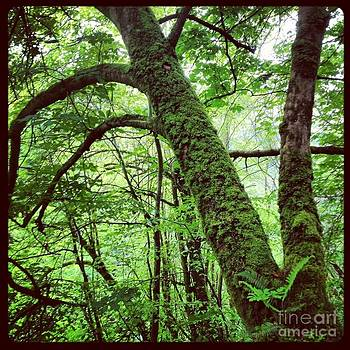 Woodlands of Glencar Falls by Sabrina Gamig