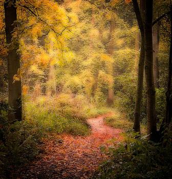 Woodlands path by Paul Davis