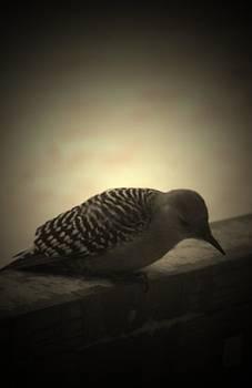 Woodpecker In Winter by Crystal Johnson