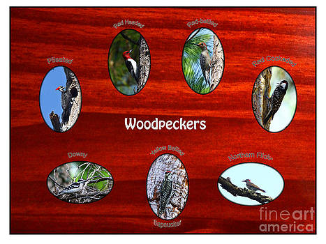 Barbara Bowen - Woodpeckers