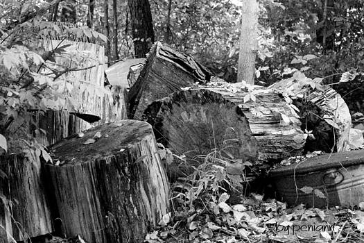 Woodpile by Penny McClintock