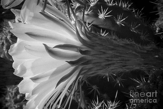 Darcy Michaelchuk - Woven Flower BW