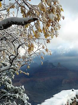 Yavapai Point 5 by Carrie Putz