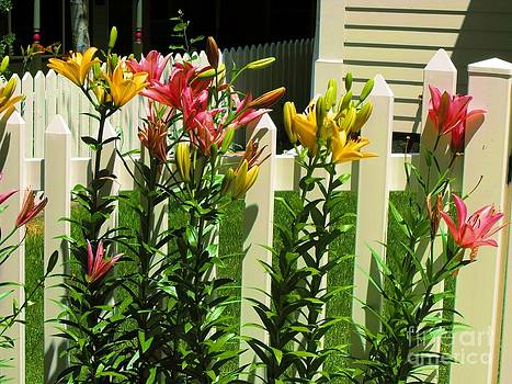 Yellow and Pink Day Lillies by Annie Gibbons