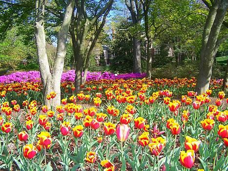 Yellow and Red Tulips by Sandra Lira